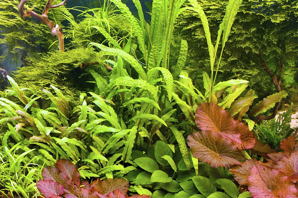 Aquarium schatzberger for Betta fish natural environment